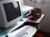 26-anchio-voglio-usare-il-computer