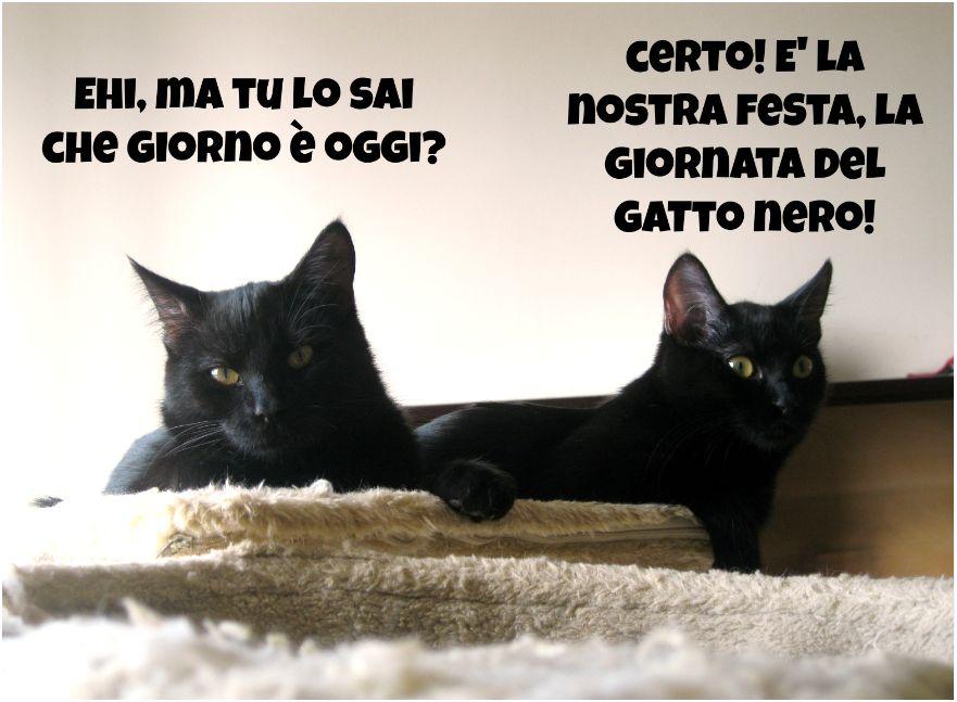 Gatto Nero 2012 Tutte Le Vostre Storie Associazione A Coda