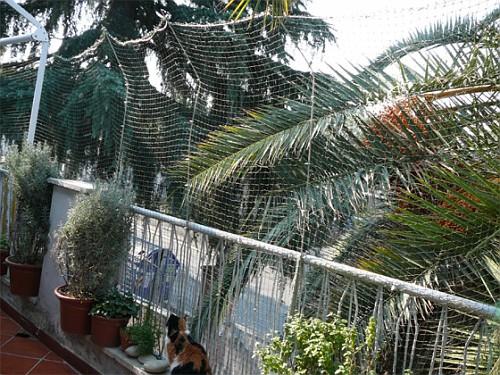 Recinzione gatti balcone