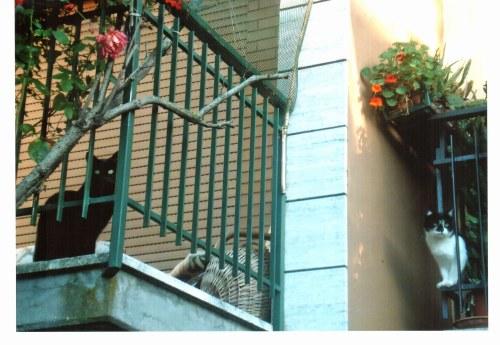 61-separati-da-un-balcone