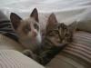 131-cuore-di-gatti