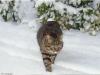 136-alla-scoperta-della-neve-