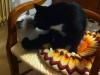 15-bacini-gattosi-copia