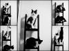 64-minimalismo-felino-copia