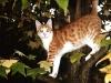 81-una-tigre-in-giardino