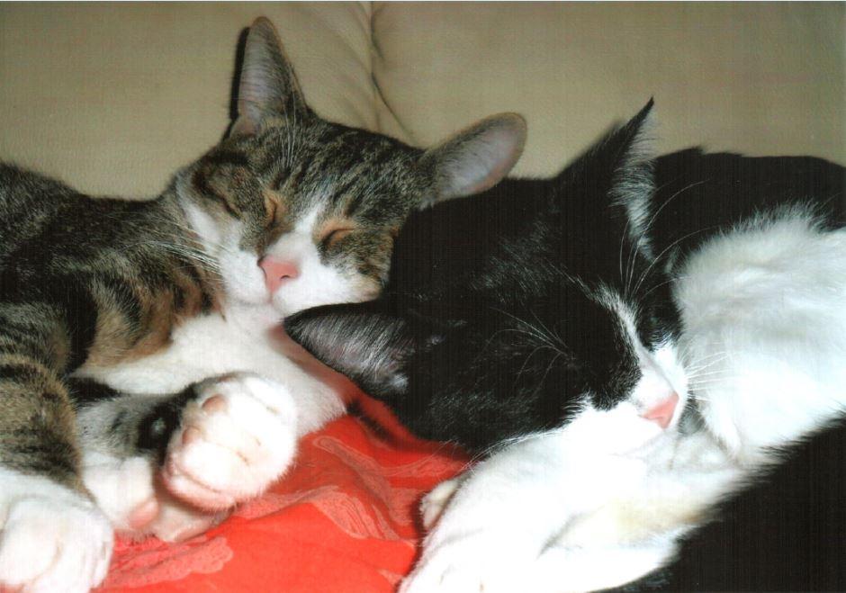 1-che-angioletti-quando-dormono