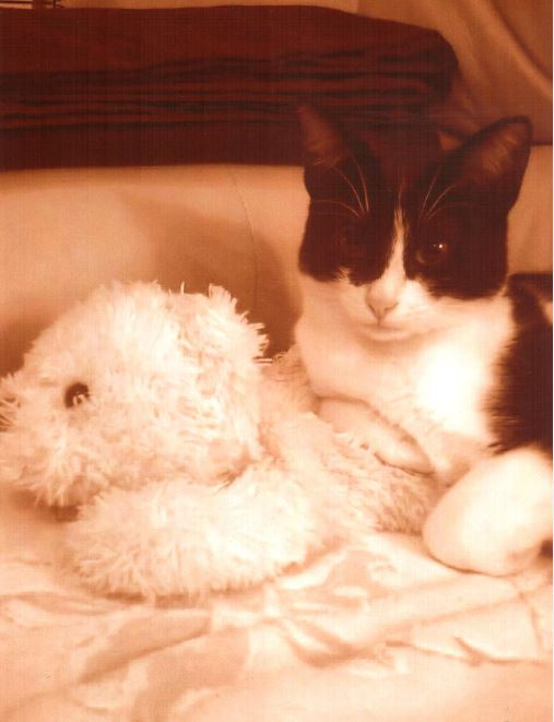 2-gattina-o-principessa