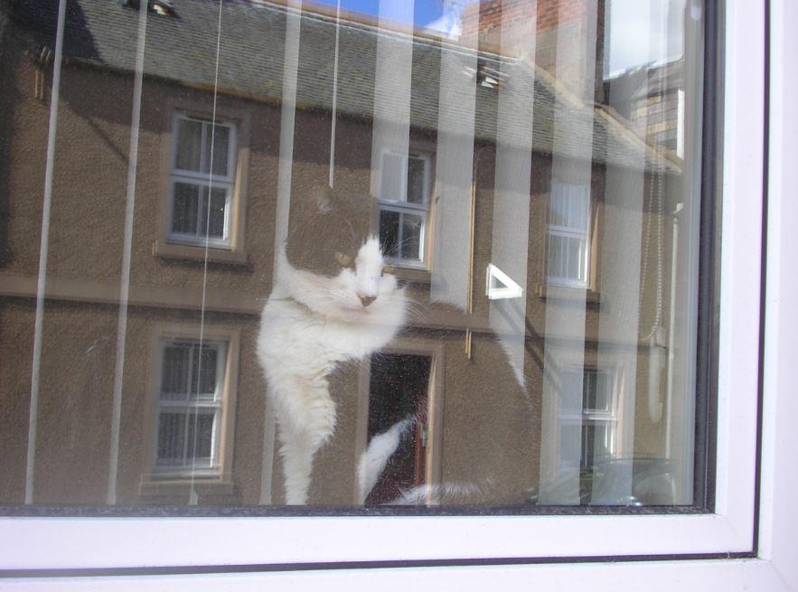 41-il-misterioso-gatto-che-osserva