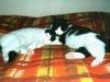 16-sonnellino-coccoloso