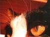21-occhi-di-gatto