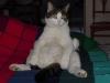 47-buddha-cat